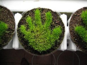 grass-hand-print