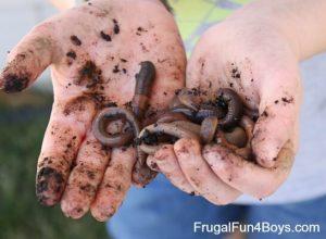 Making a worm jar by Frugal Fun WIth Boys